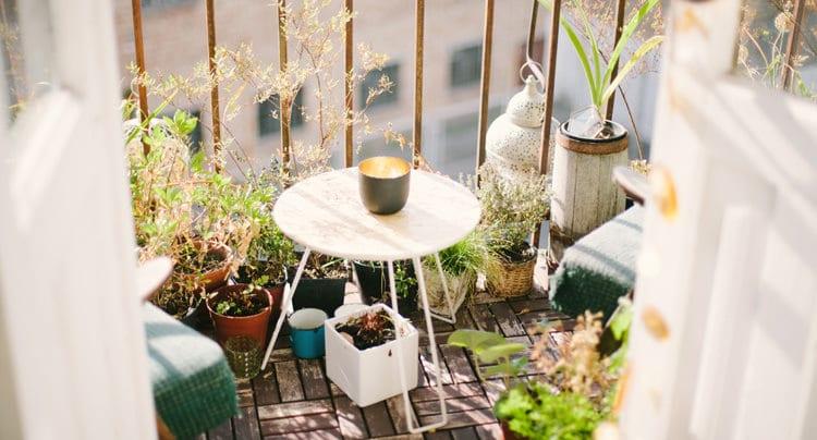 Lavendel auf dem Balkon