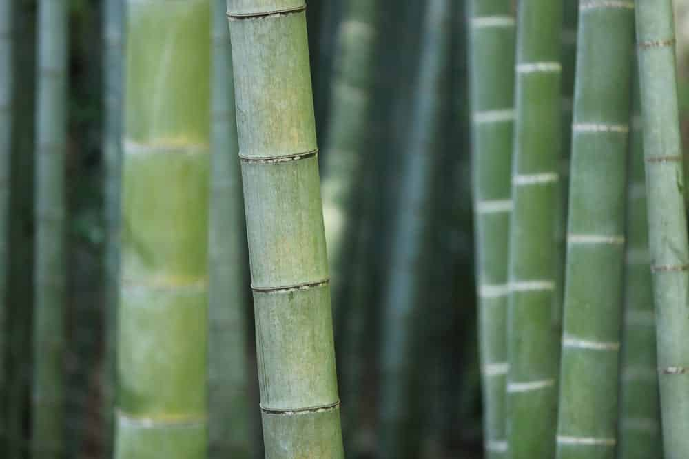 Bambus ist ein beliebtes Material bei asiatischen Möbel, Foto: kazuend / Unsplash